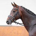 Verkaufspferd Caspello