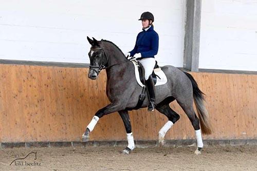 Verkaufspferd Wallach v. Schwarzgold